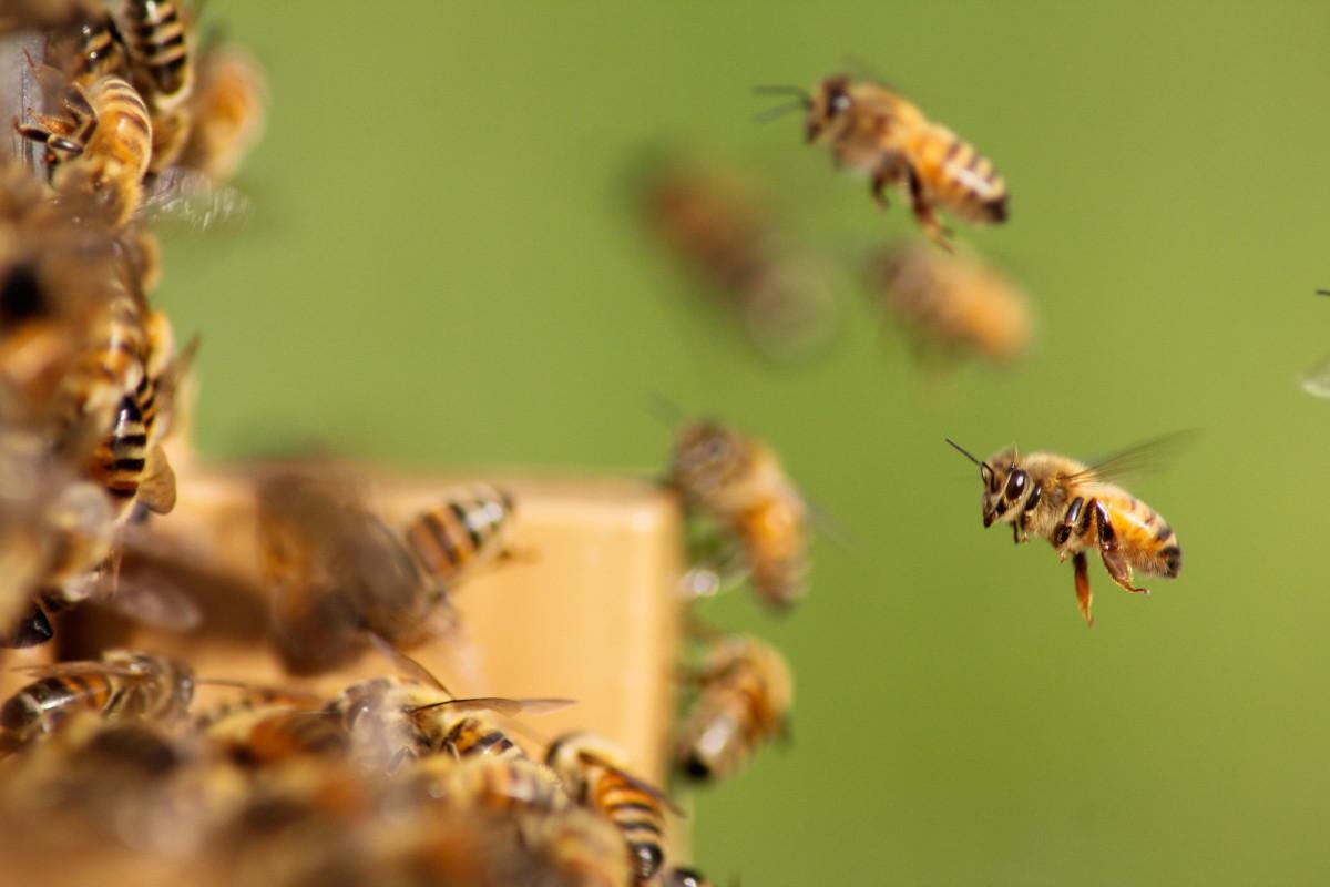 ESGeo e 3Bee insieme per le api, nuova unità di misura della CSR d'impresa
