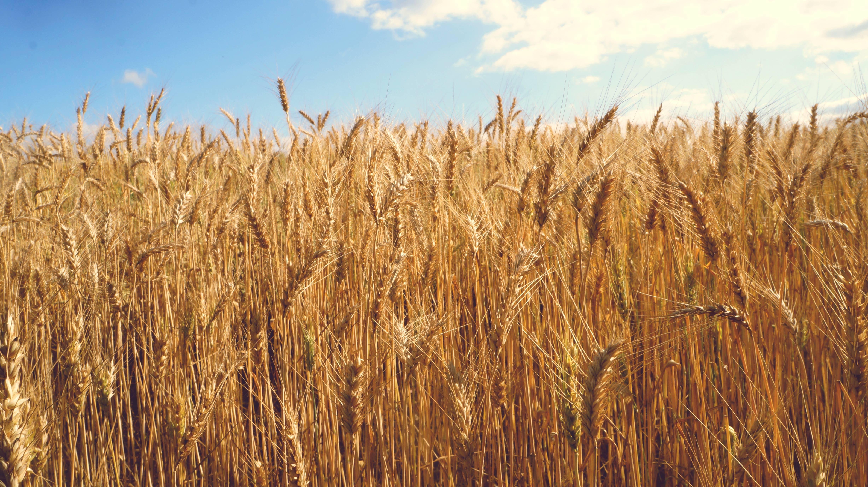 Mejoras en técnicas agrícolas mediante Computer Vision