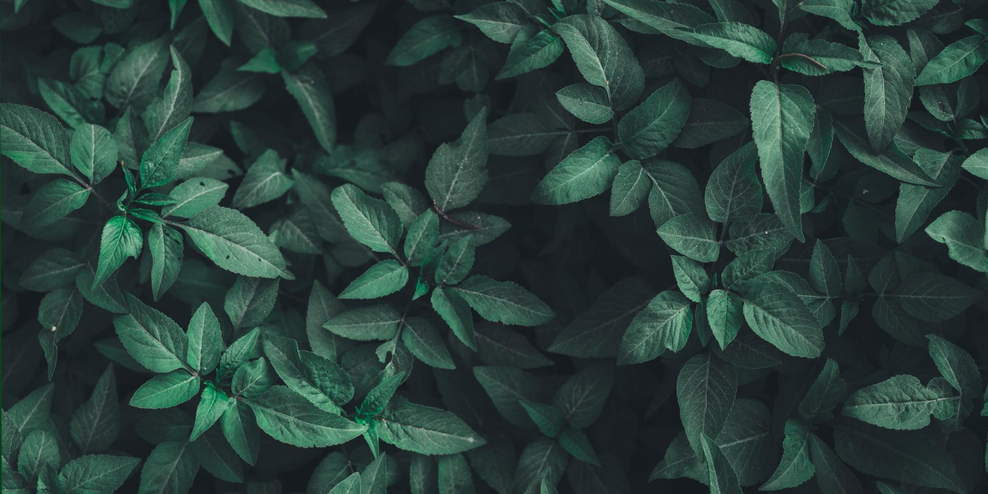 Hacia una nueva cultura de innovación sostenible