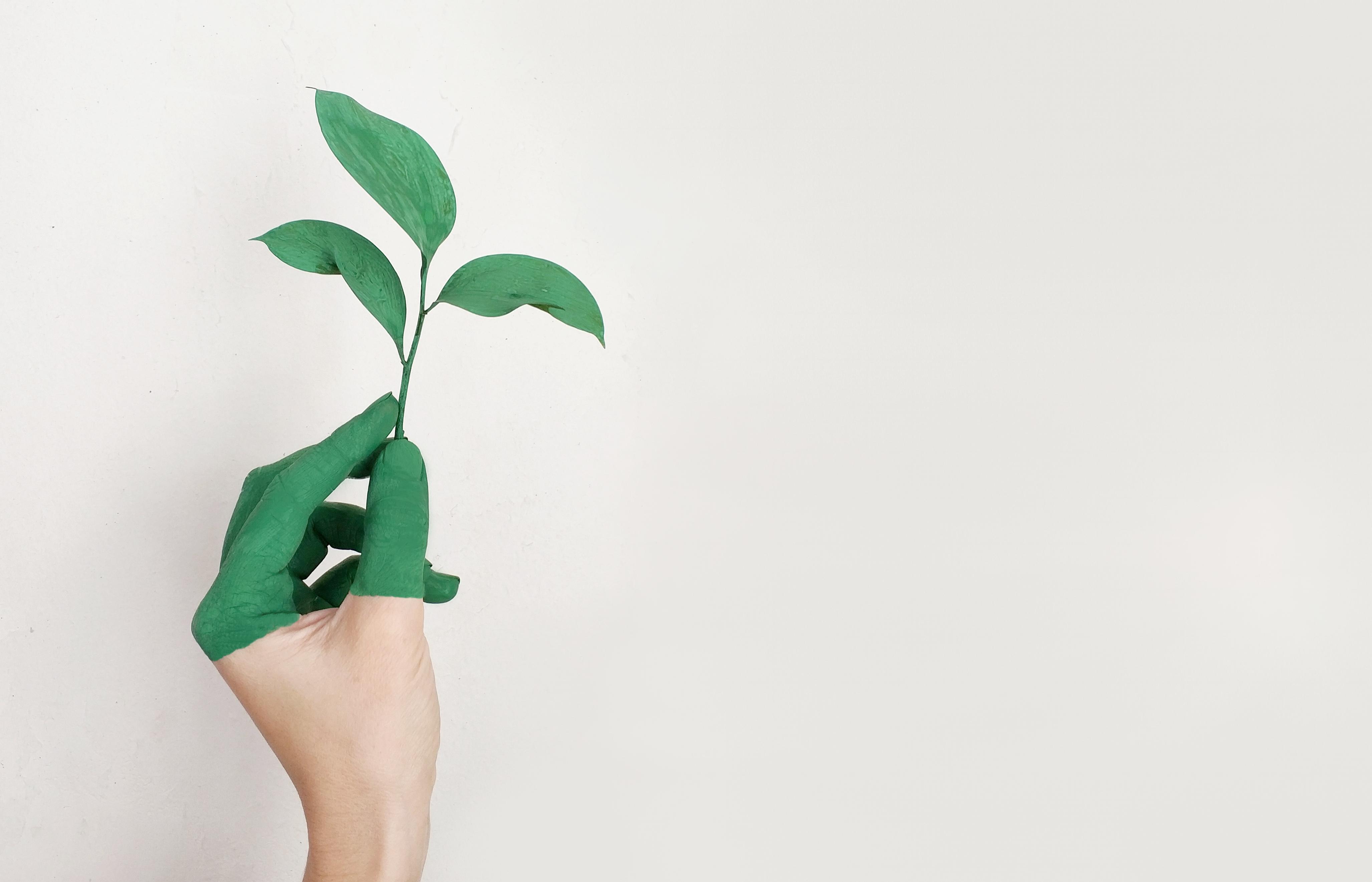 Dados não financeiros e relatório de sustentabilidade: rumo a uma nova cultura de inovação sustentável